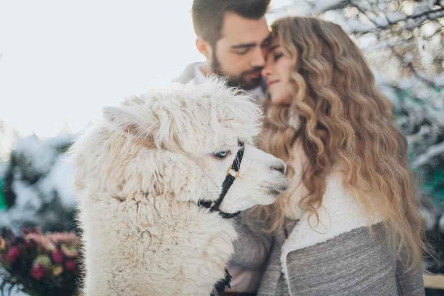 Horoskop za Dan zaljubljenih: Romatično putovanje za Blizanca, Vodolija zaljubljena do ušiju, moguća prosidba za Lava